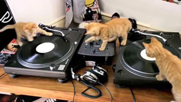 <p>Friskies</p><p>'DJ Kittens'</p><p>Directed by Liam & Grant</p>  <p>Almost 3 millions hits on You Tube (and counting...)</p>